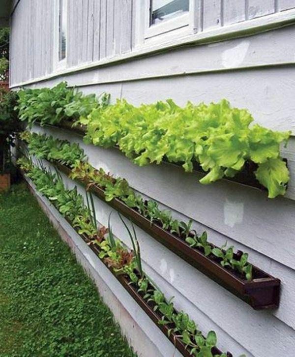 ideen-gartengestaltung-grüne-pflanzen - dekoration für garten,