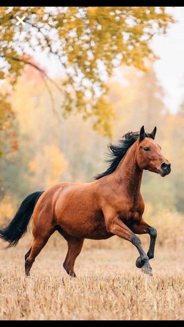 Epingle Par Pauline Sur Animaux Avec Images Mustang Cheval Cheval Bai Cheval Galop