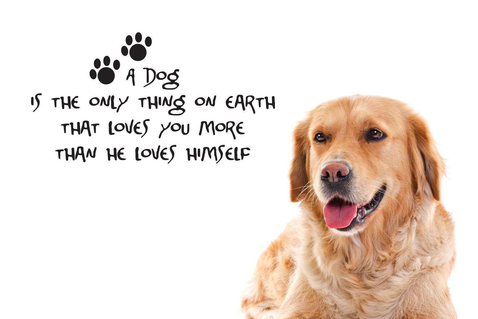 Dog sayings and quotes 2019