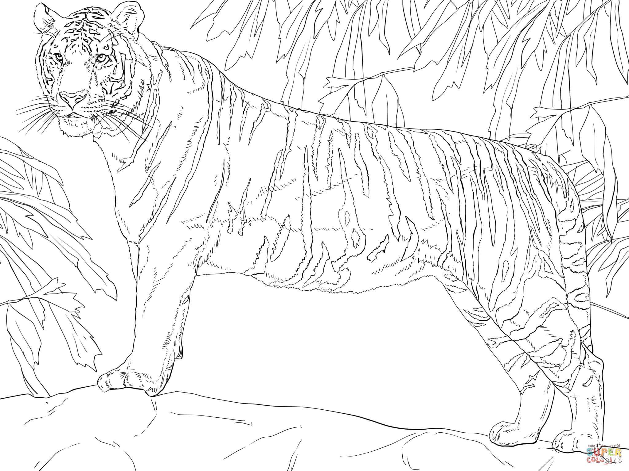 Stehender Bengalischer Tiger Super Coloring Ausmalbilder Ausmalen Malen Nach Zahlen Kinder