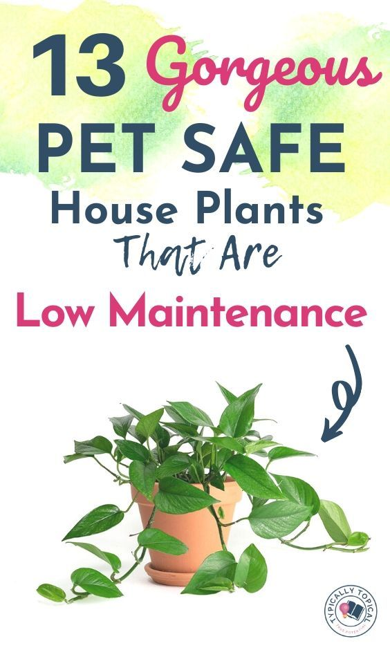 13 Gorgeous Pet Safe Indoor House Plants That Are Low Maintenance | Pet friendly plants