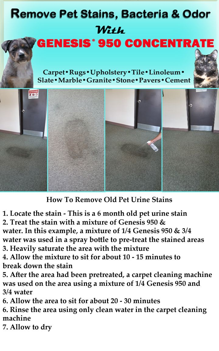 How To Remove Old Pet Urine Stains From Carpet