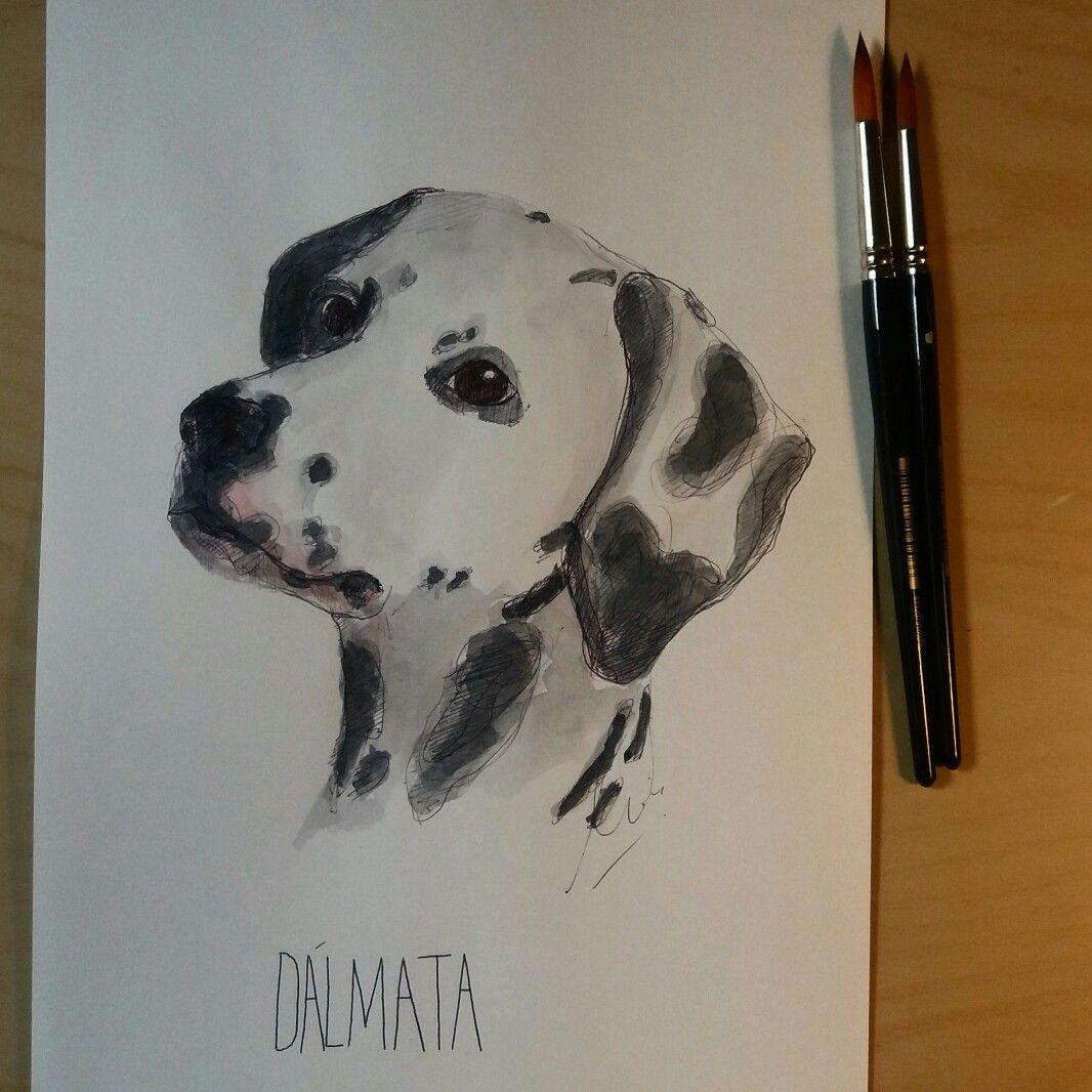 #dalmata #watercolour