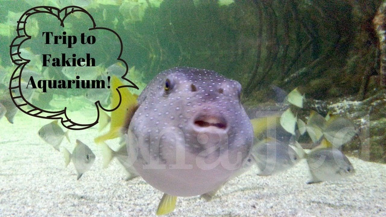 Trip To Fakieh Aquarium فقيه أكواريوم Private School Trip Fish Pet