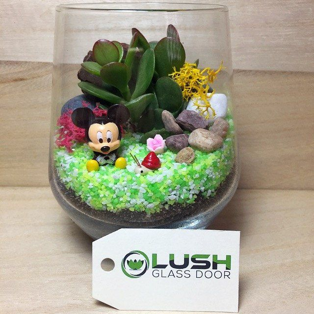 Cute Mickey Themed Succulents Terrarium Succulent Terrariums