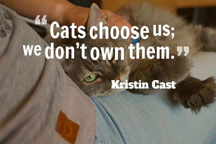 Cats Choose Us We Dont Own Them Kristin Cast Author House Of
