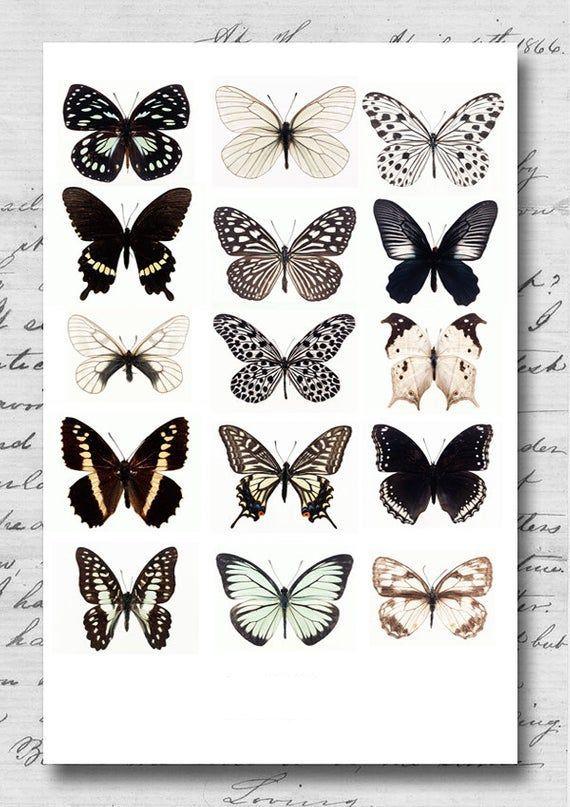 Photo of 45 wunderbare Schmetterling Tattoo-Ideen für Tattoo-Liebhaber – Seite 96 von 99 – CoCohots