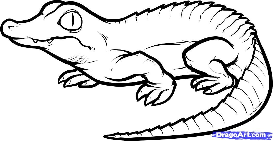 How To Draw A Baby Crocodile Baby Crocodile Step By Step Reptiles Animals Free Online Drawing Coloring Pages Animal Coloring Pages Cartoon Coloring Pages