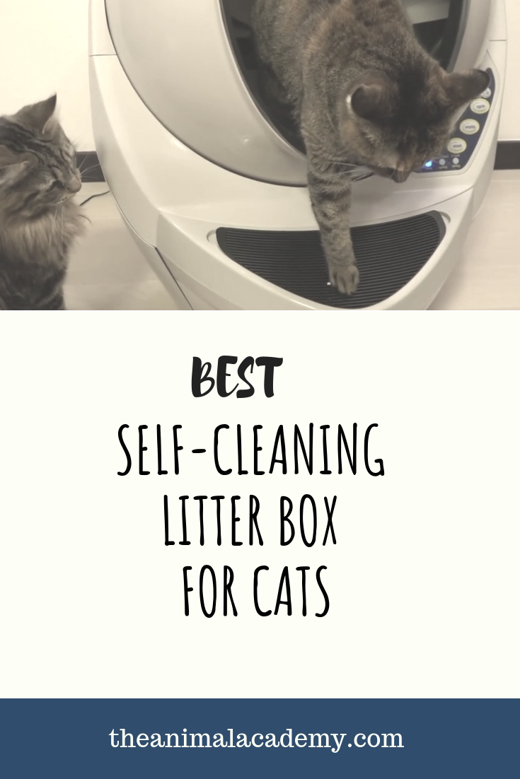 Best Self Cleaning Litter Box For Multiple Cats Self Cleaning