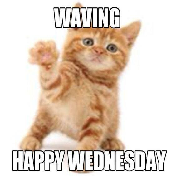Pin By Patricia Haines On Kitty Kitty Kitty Funny Wednesday Memes Wednesday Memes Good Morning Wednesday