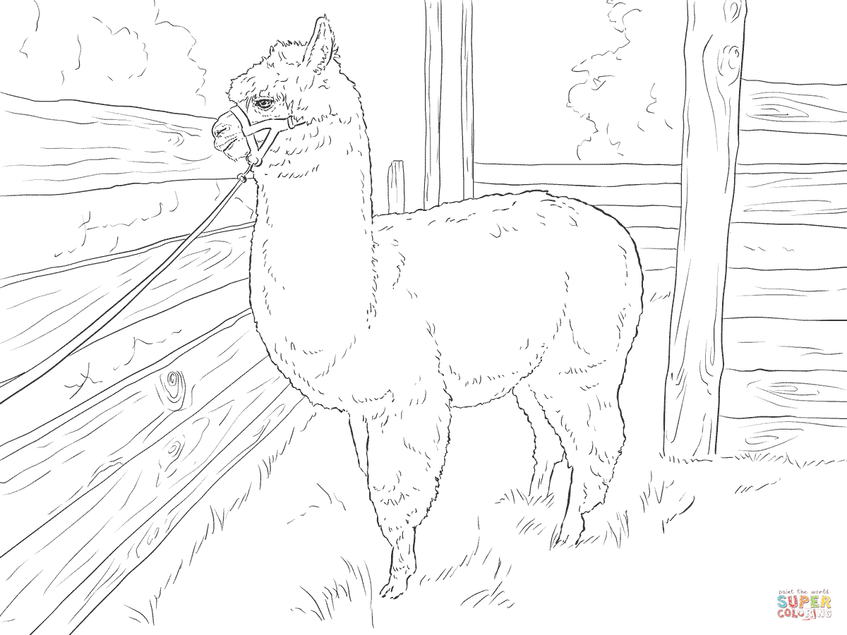 Realistic Alpaca Coloring page Free Printable Coloring Pages