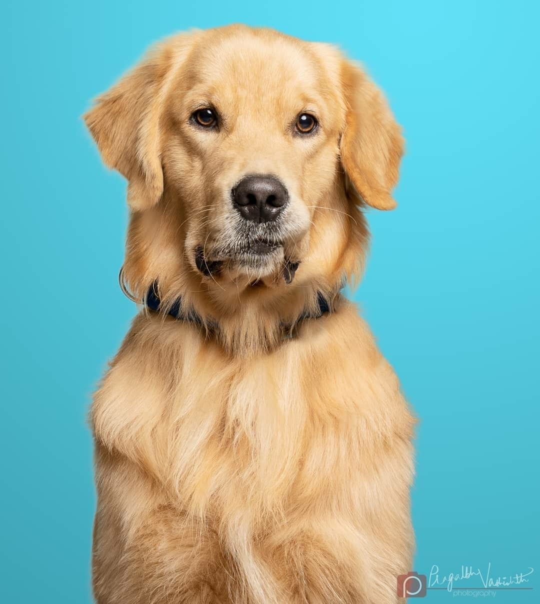 Pin By Neha Chowhan On Dogs Golden Retriever Dogs Animals