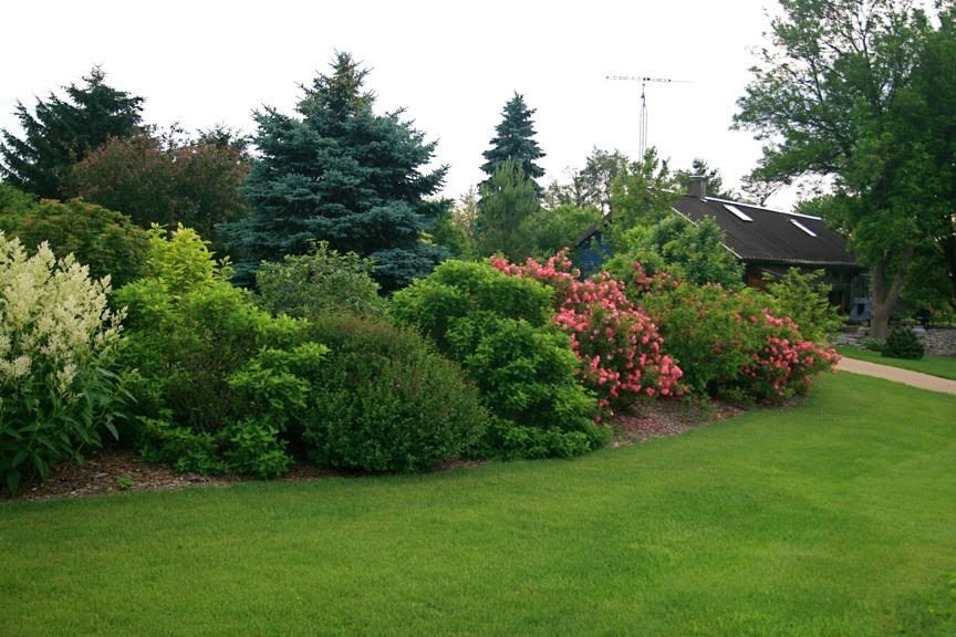 The mature size of the shrubs gives the yard a nice border and privacy from others jodie - Shrubbery for privacy ...