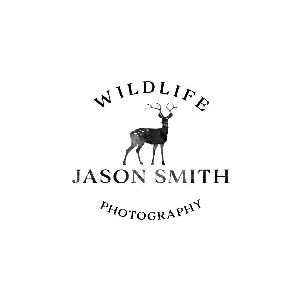 Photographer Logo Pre Made Logo Design Photographer Etsy Logo Design Photographer Logo Premade Logo Photography