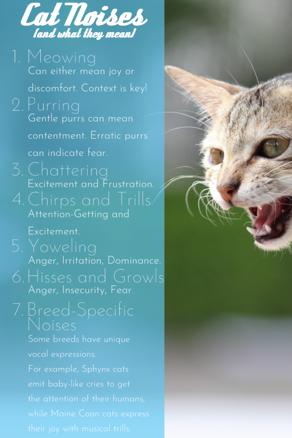 Feline Linguistics Cat Noises And What They Mean Cats Will Play Cat Noises Cat Parenting Cats