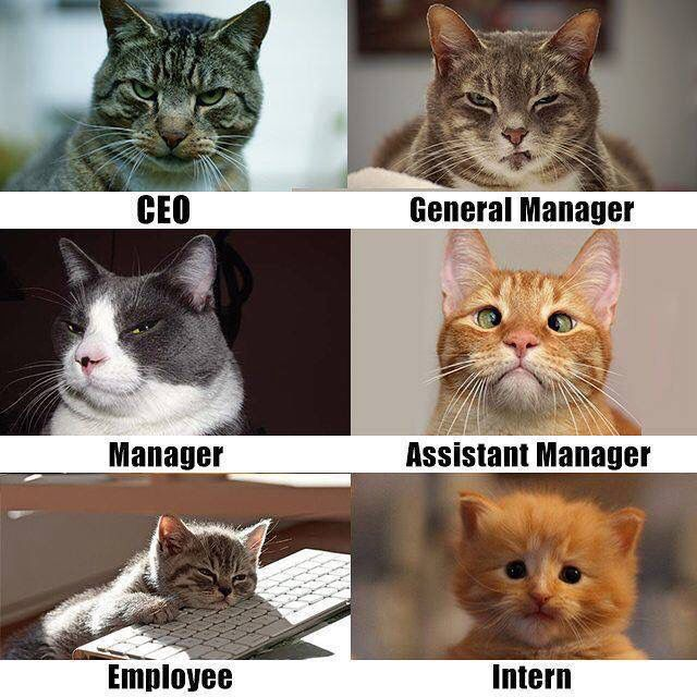 The Work Crew Funny Animal Pictures Cats Animal Memes