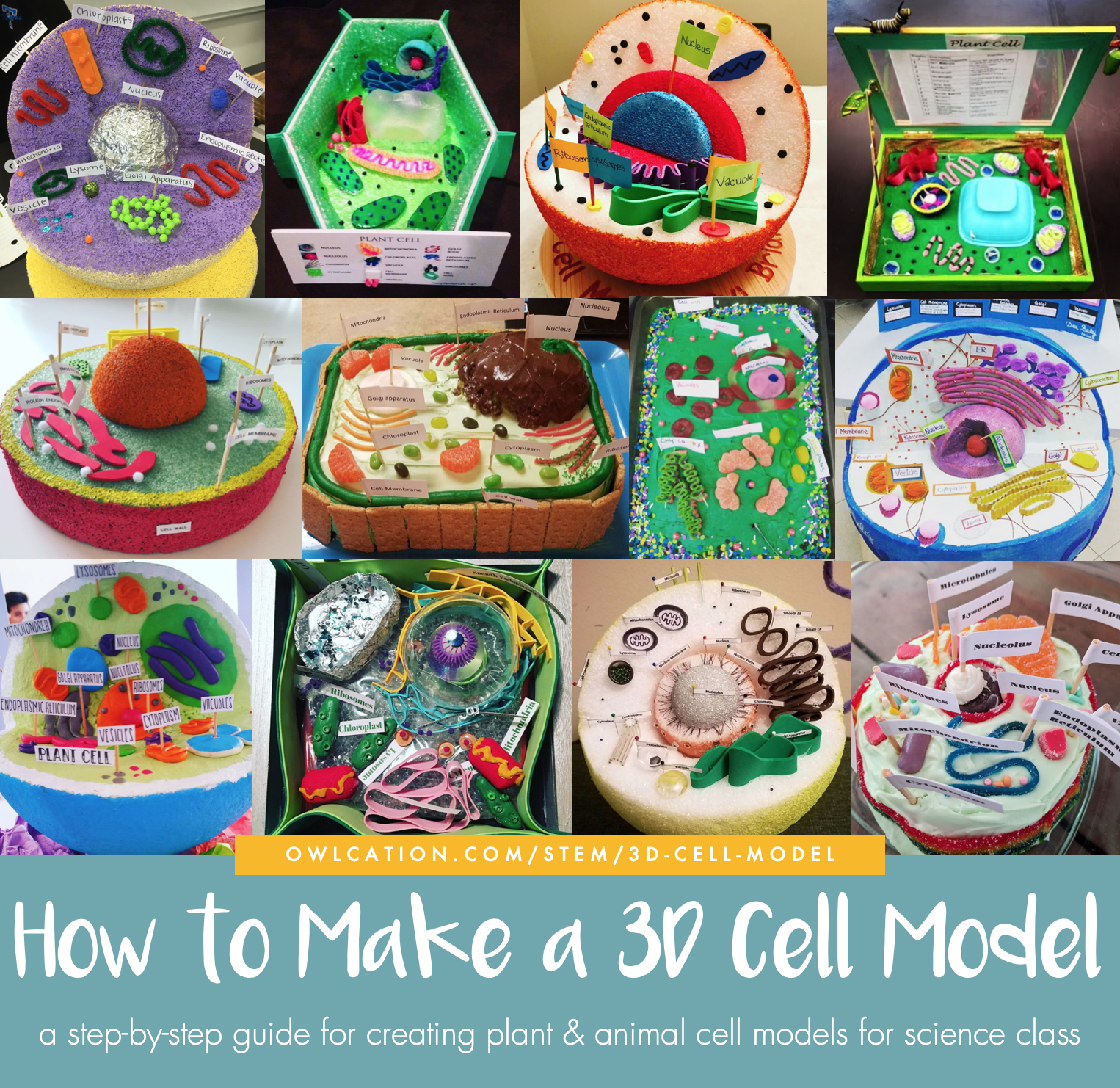 How to Create 3D Plant Cell and Animal Cell Models for