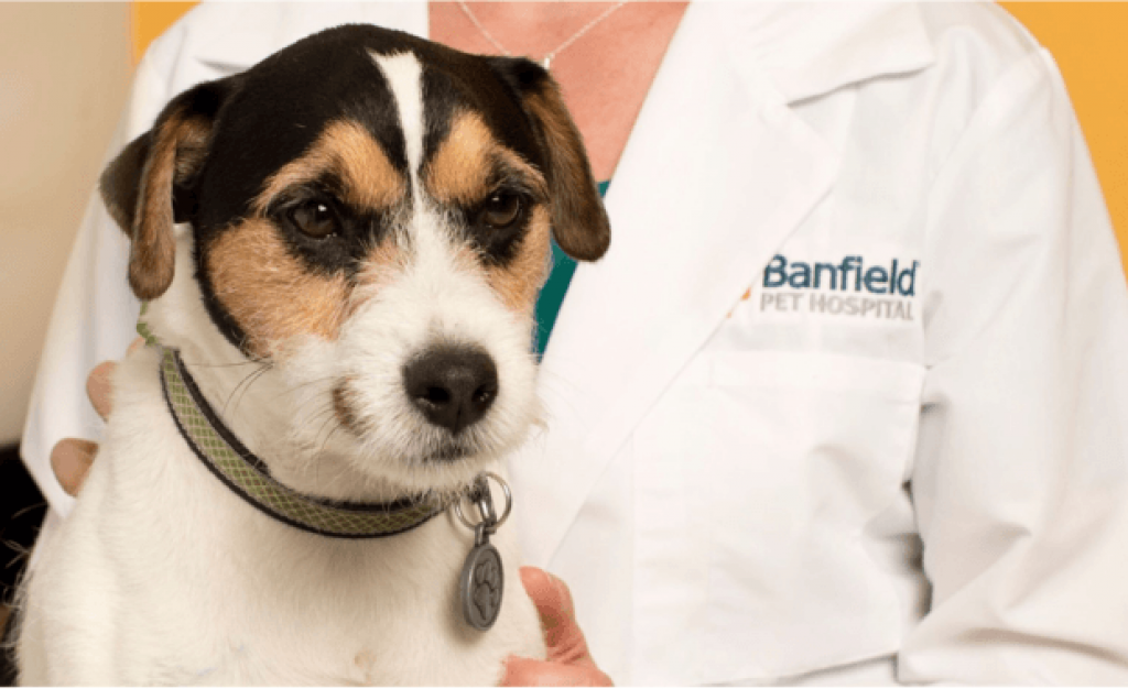 Did You Adopt A Puppy Or Kitten You Can Get A Free Office Visit And Veterinary Consultation Thanks To Petsmart And Banfield Pet Hospital With Over 900 Pet Hos En 2020