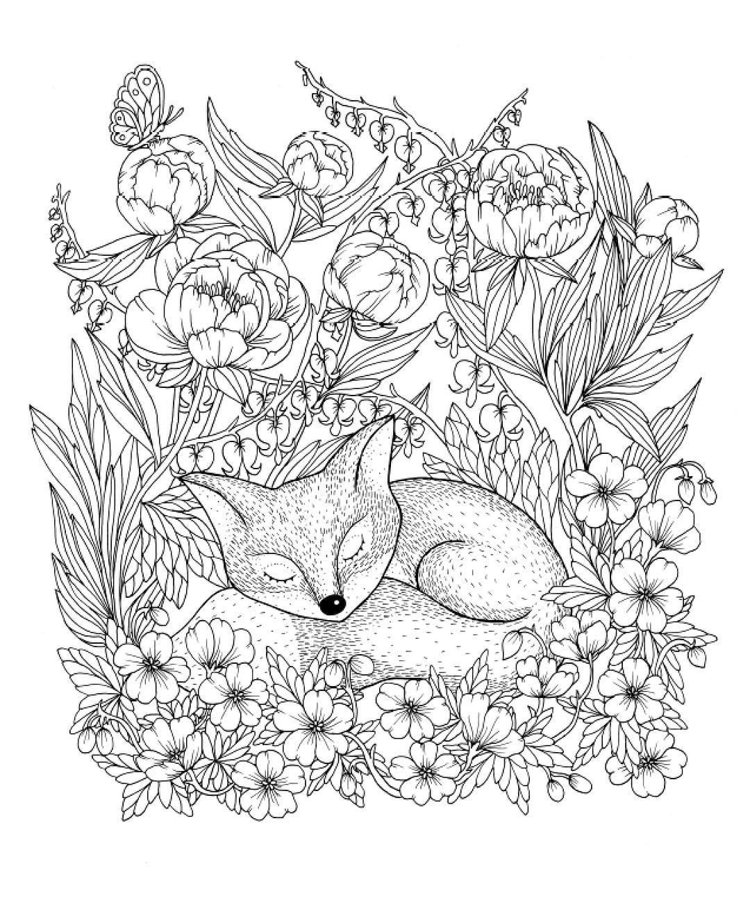 sleeping fox amongst the ranunculus - Fox Coloring Book