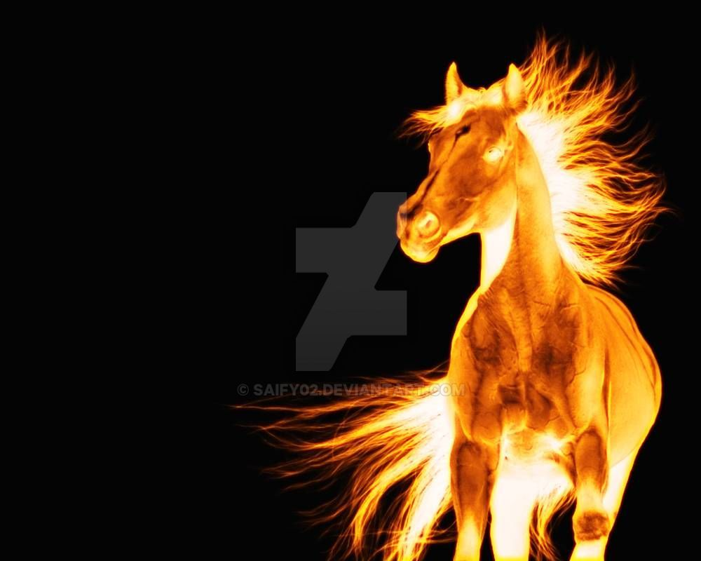 Flaming Horse By Saify02 On Deviantart Fire Horse Horses Horse Pictures