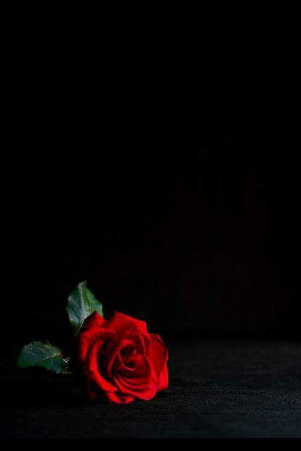 Pin By Lina Garcia On San Valentin Rose Wallpaper Flower Phone Wallpaper Red Roses Wallpaper