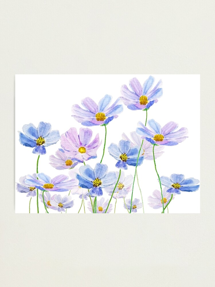 Purple And Blue Cosmos Flower Watercolor Photographic Print By Colorandcolor Redbubb In 2020 Blue Flower Wallpaper Blue And Purple Flowers Purple Flowers Wallpaper