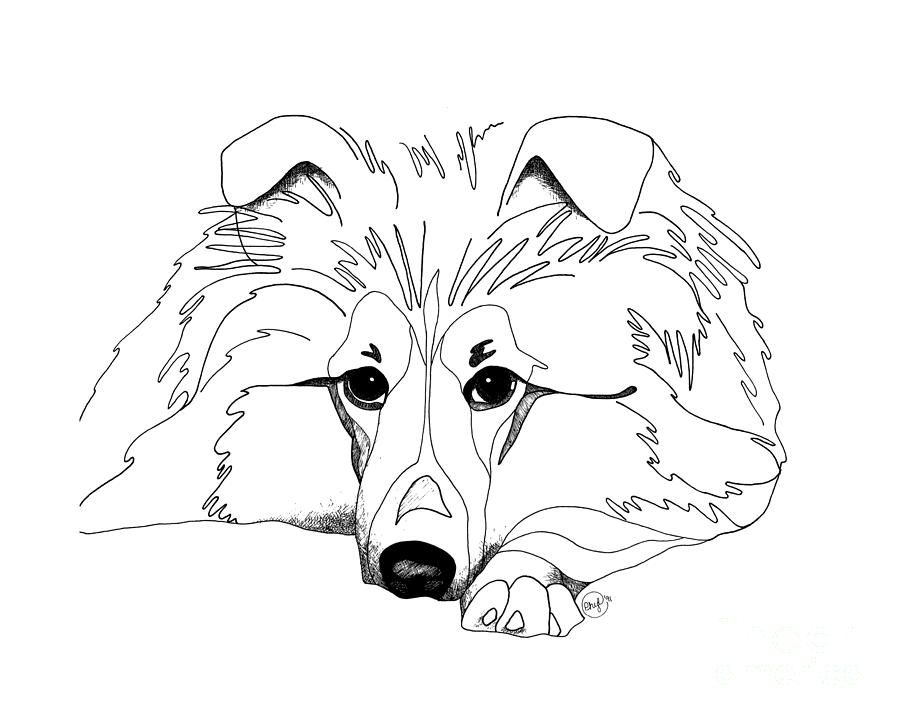 Shetland Sheepdog Coloring Pages Sheltie Love Drawing By Retouch