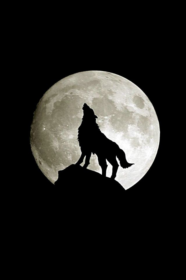 Full Wolf Moon Wolf Full Moon Download Wallpaper For Iphone Wolf Wallpaper Wolf Howling Bark At The Moon