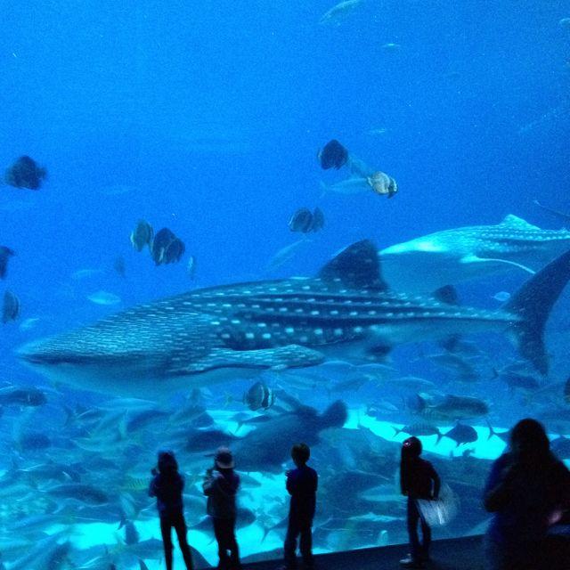 Whale shark @ the Georgia Aquarium. | Georgia aquarium ...