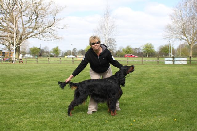 Brodie at the Gordon Setter Association Champ Show....Kilnrae Kemerton Crusader of Billingham - as his KC papers say! Hips 6:4, PRA rcd4 = carrier, temperament 'lovely' :)