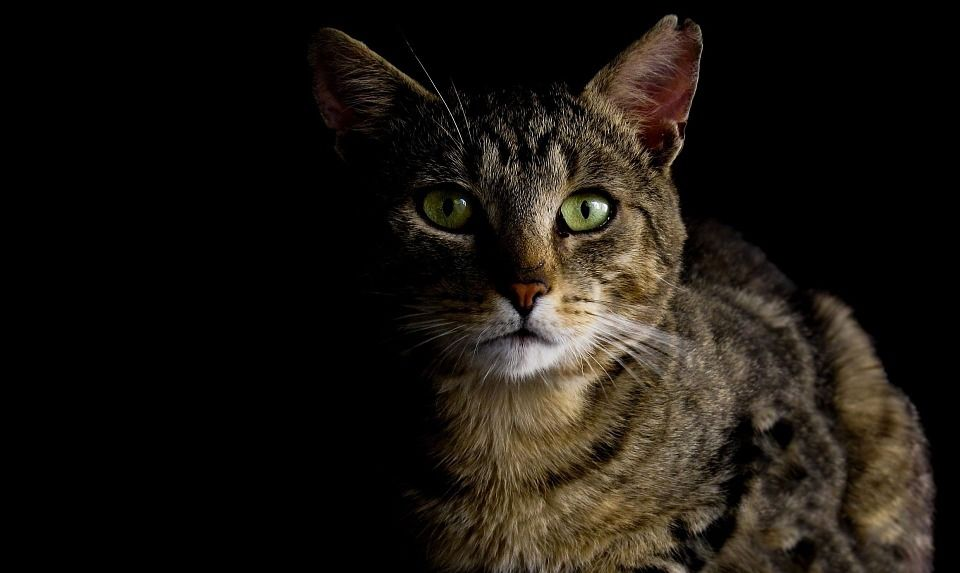 Dark Nights And Dangerous Roads Help Your Pet Stay Safe During Winter Cats And Kittens Cats Cat Aesthetic