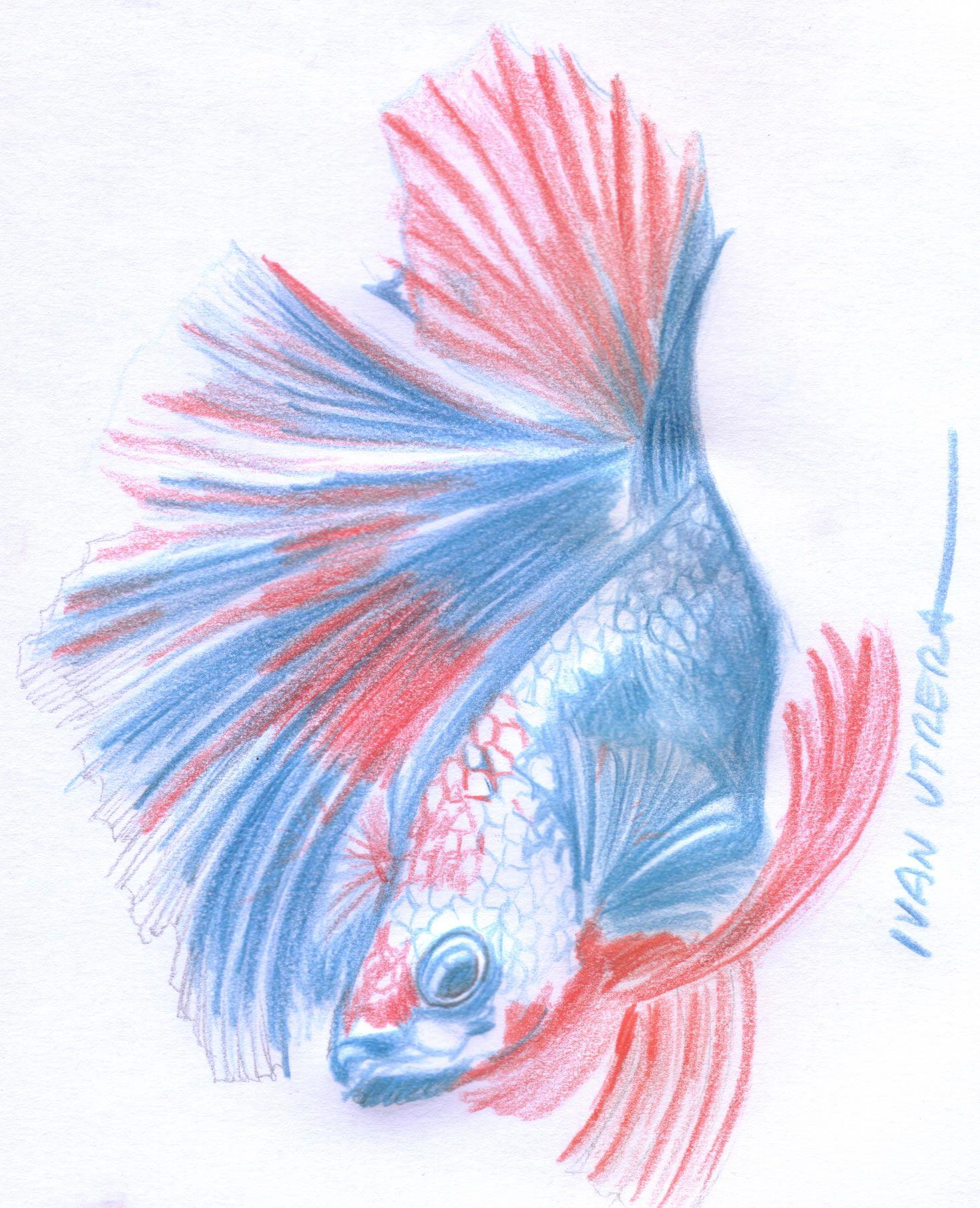 pez en lapices de colores | dibujo en lapices de colores | Pinterest ...