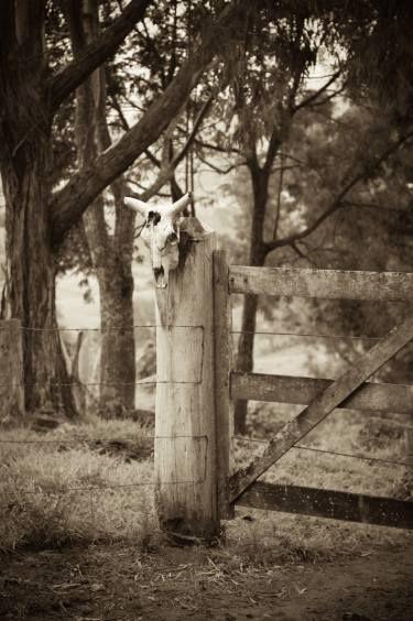 "Saatchi Art Artist Flavio Coelho; Photography, ""Bull skull and fence"" #fineart"