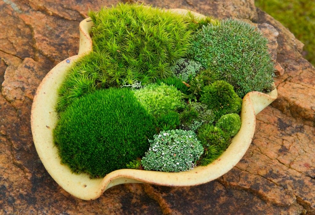 Nice For Something A Little Different, A Moss Planting Dish.