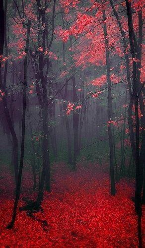 Black Forest Red Trees Pejzazhi Naturalnyj Fotografii Prirody