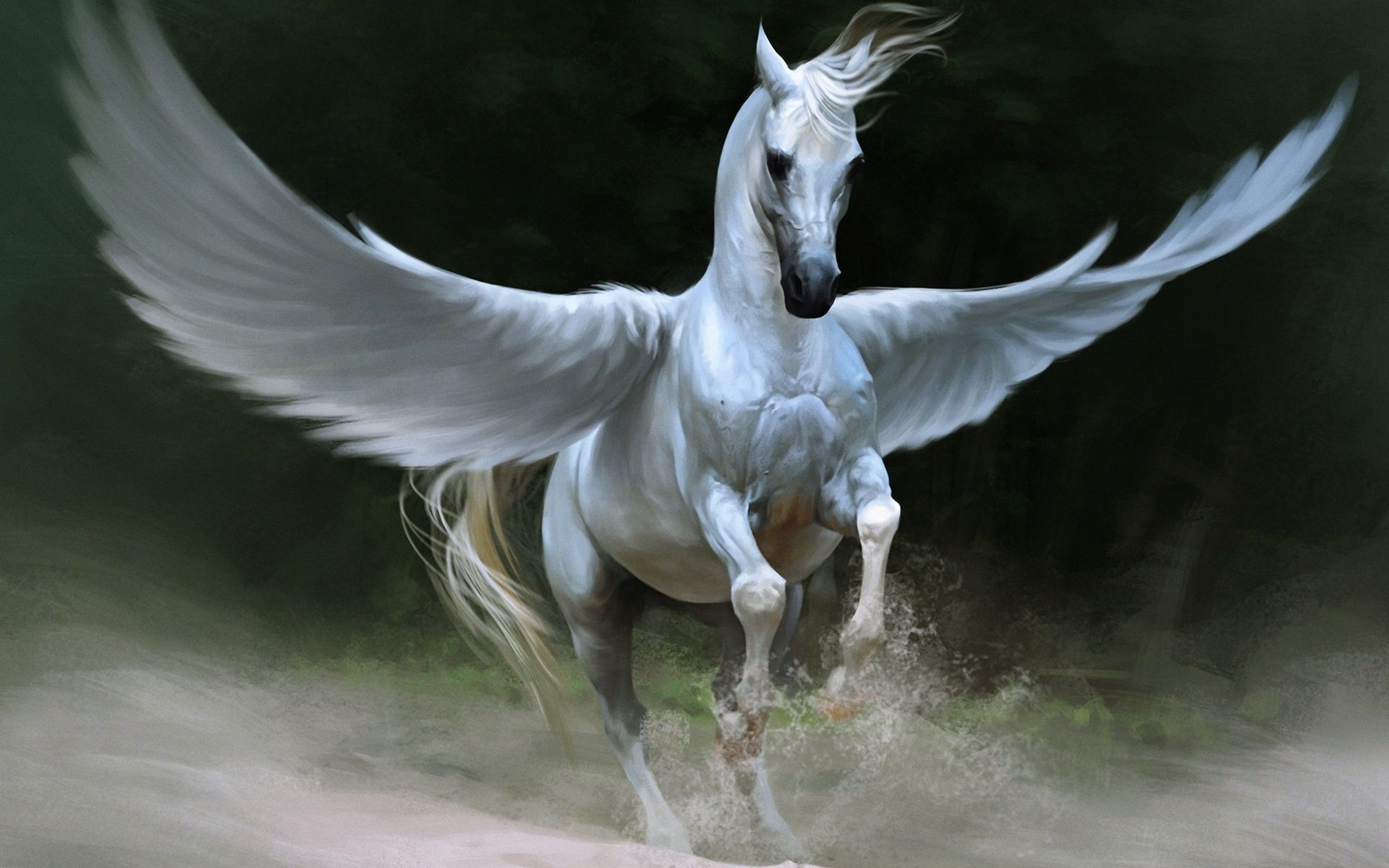 White Horse With Wings Horse Wallpaper Greek Mythological Creatures Horses