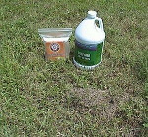 baking soda and vinegar to get rid of fire ants. sprinkle baking soda onto ant bed, pour vinegar on, watch them die!