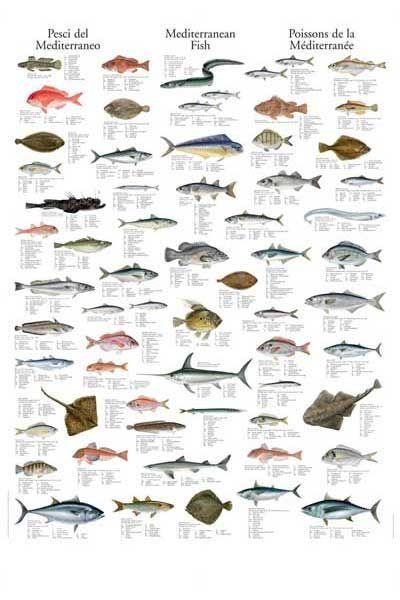 Merchandise Fish Chart Sea Fish Types Of Fish