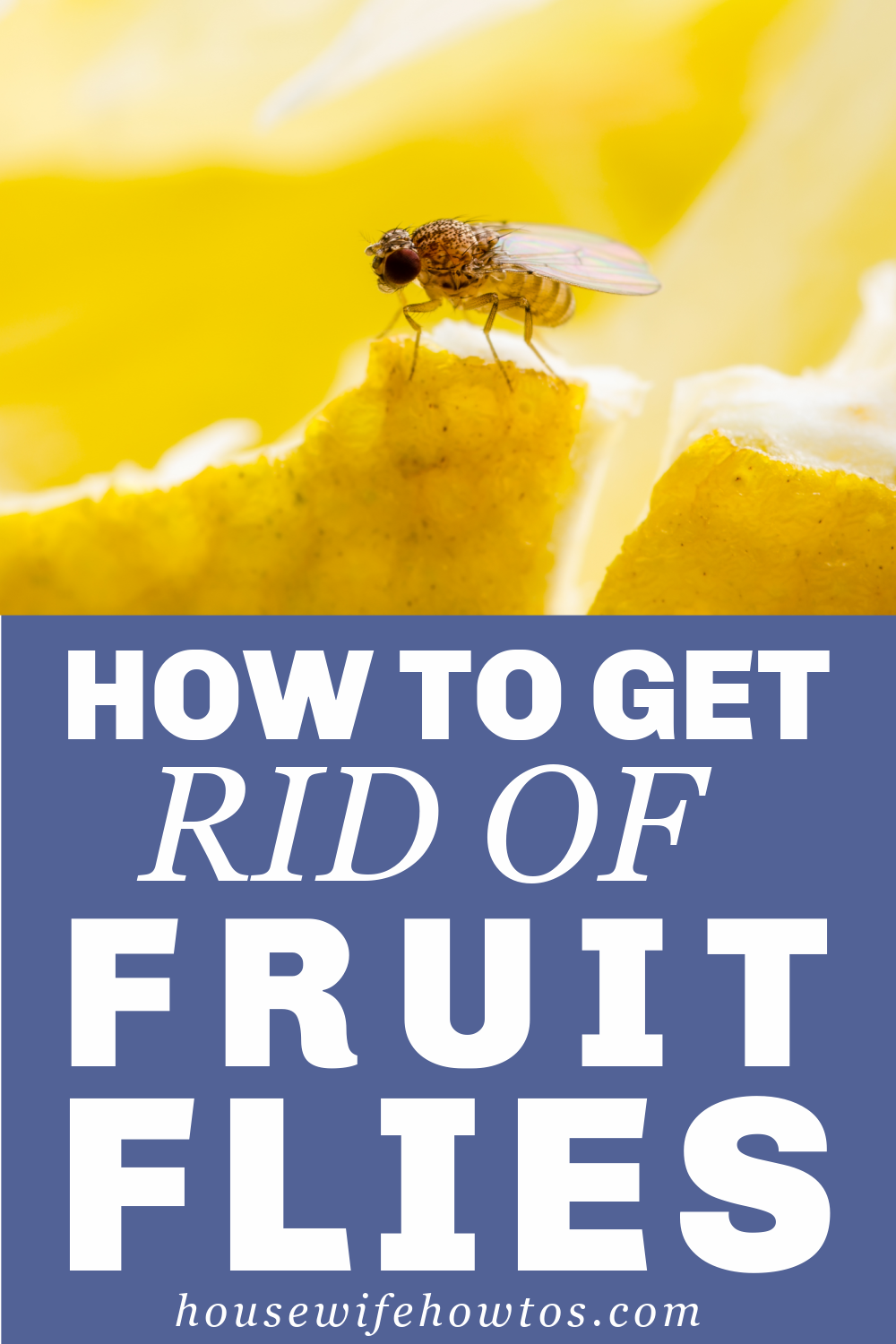 How To Get Rid Of Fruit Flies In 2020 Fruit Flies Household Pests Kitchen Cleaning Checklist