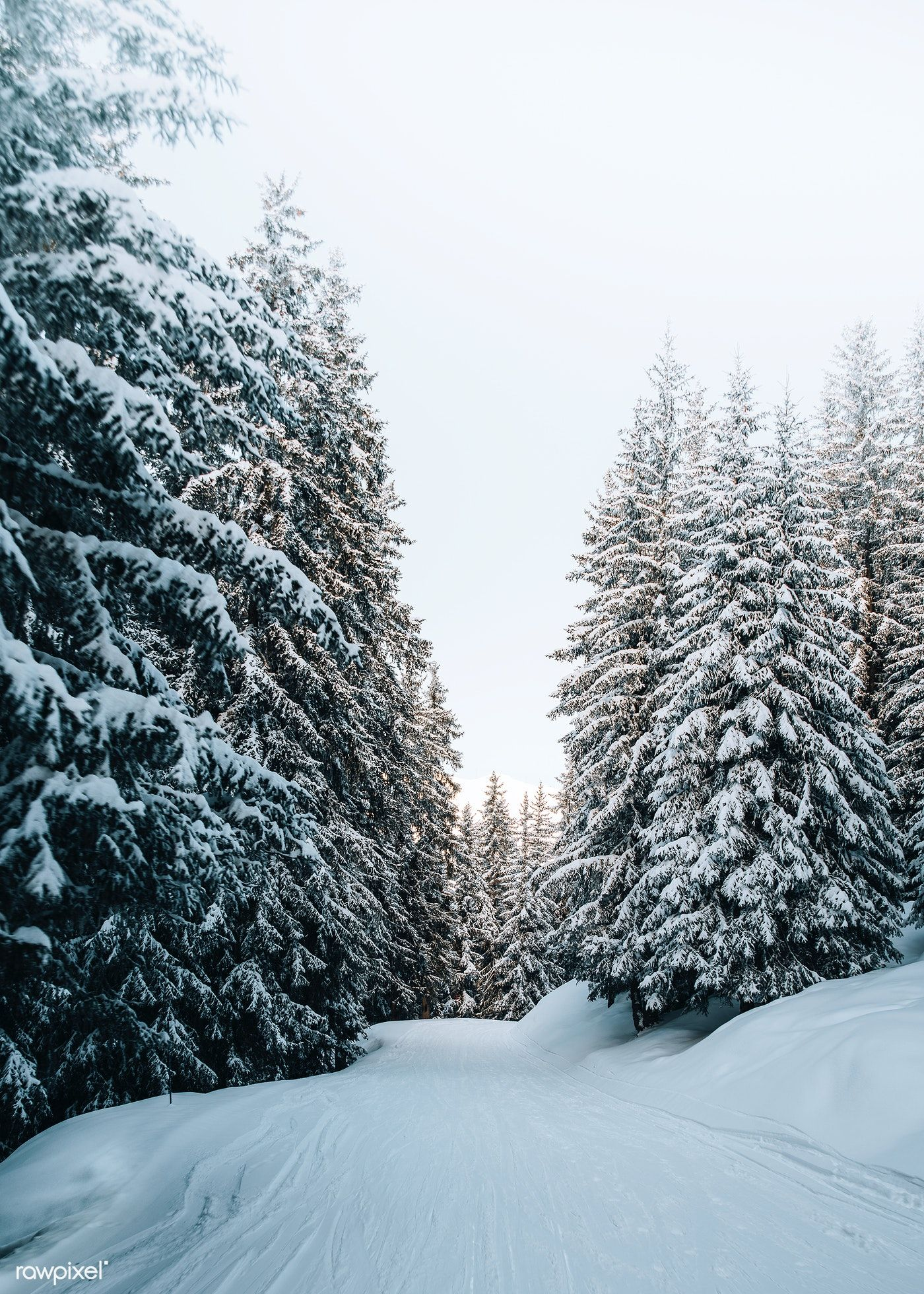 Download Premium Photo Of View Of A Snowy Forest 2255747