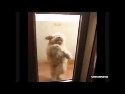 Salsa Dogs Dance Off Dancing Dogs Compilation Funny Animal