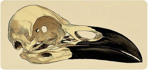 Cráneo de cuervo, via Flickr.
