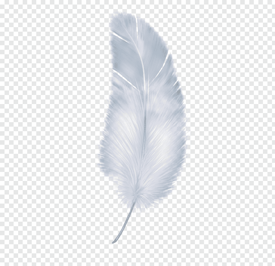 Pin By Anuj Chetia On Resources In 2021 Feather Illustration Feather Background Angel Wings Art