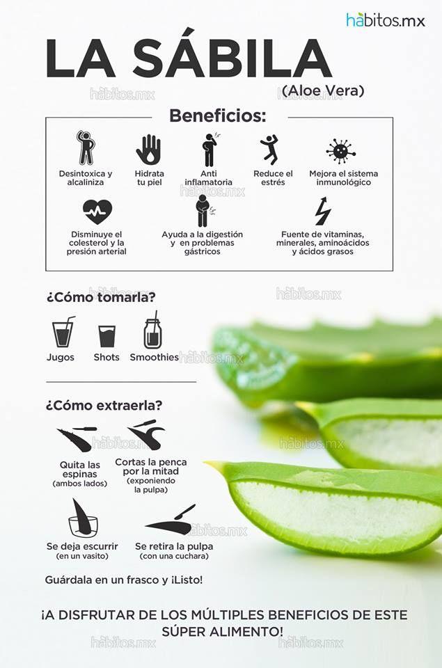 Hábitos Health Coaching   La maravillosa SÁBILA (Aloe Vera)