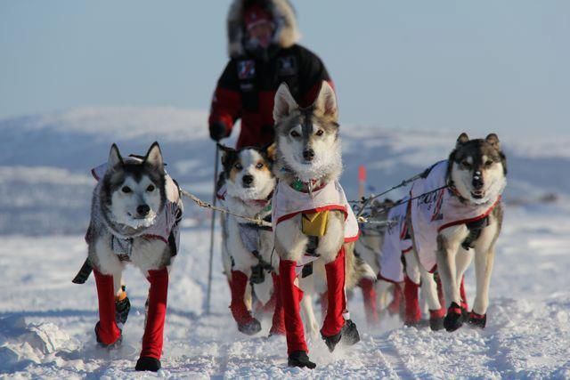 Gorgeous Photo Of Aliy S Team During The 2012 Iditarod Dog