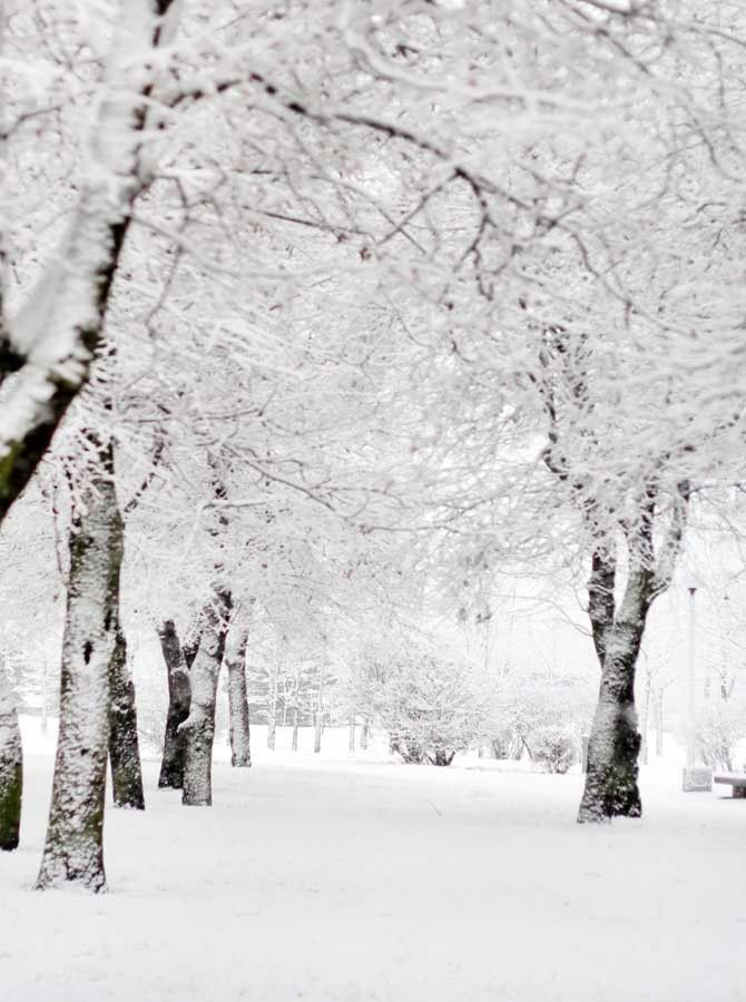 Winter Wonderland Snow Tree Backdrop – 9441
