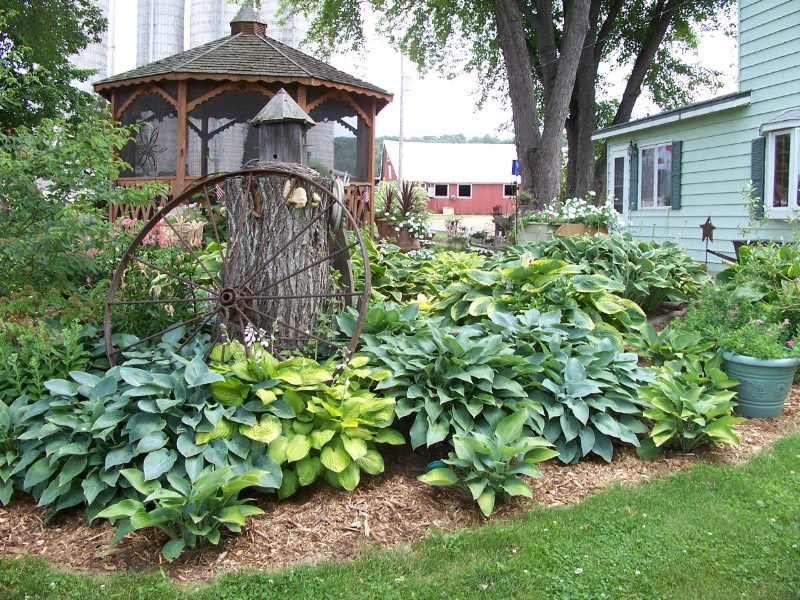 lovely hosta gardens 9 hosta garden design