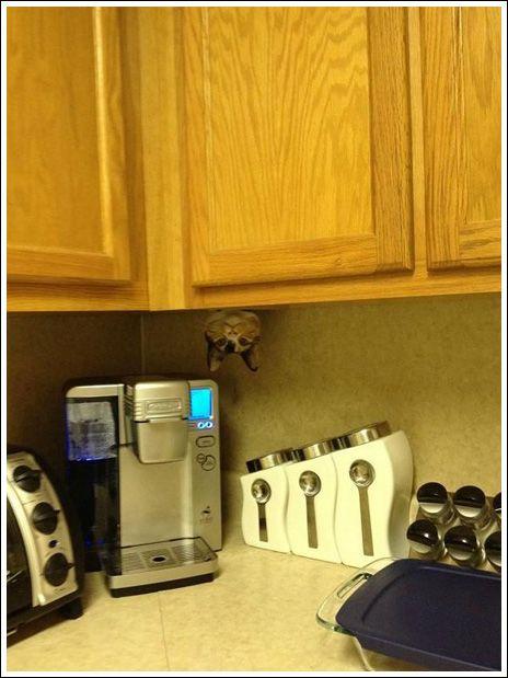 Find the cat...