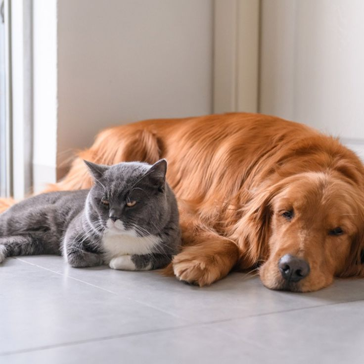 How to get rid of ants when you have a dog or cat in the