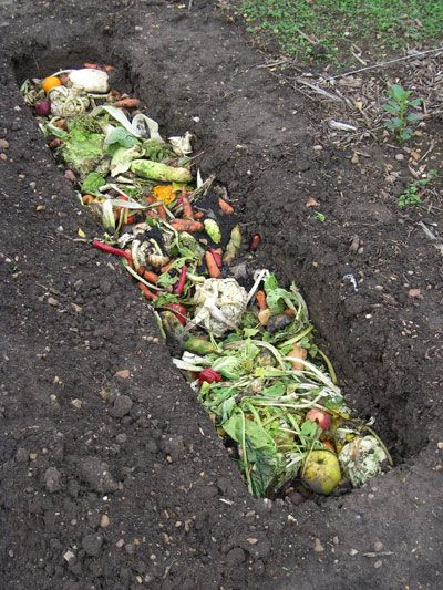 Trench Composting Dig A Short One Foot Ditch Chop Yard